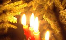 Latviju grezno Ziemassvētku egles