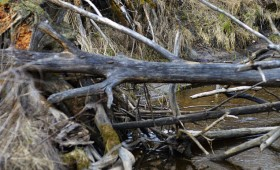 ☂ Upju un ezeru aizsargjoslās pastāv ierobežojumi