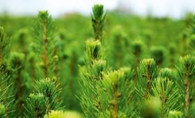 ☂ Pieejamais atbalsts meža īpašniekiem jaunajā plānošanas periodā