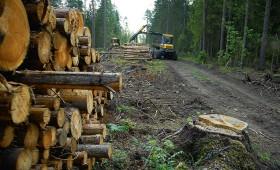LVM būvētie meža ceļi nodrošina kokmateriālu transportu