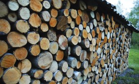 ☂ Kādai koksnei ir labākā siltumatdeve?