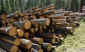 ☂ Kā izdevīgāk pārdot meža cirsmu?
