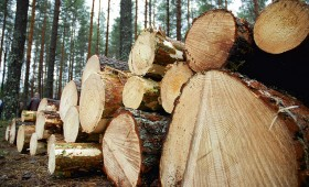 Līdz 1. februārim jāiesniedz koku ciršanas pārskati