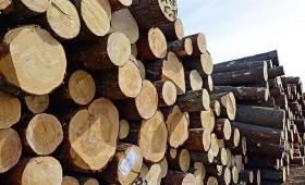 Mainīts apaļo kokmateriālu uzmērīšanas standarts
