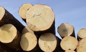 Privātajos mežos – ciršanas rekords