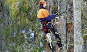 Algas pieaugums mežsaimniecībā šī gada sākumā – 11,5%