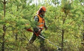 Meža apsaimniekošanas darbu konkursā – rekordliels piedāvājumu skaits