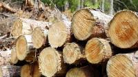 ☂ Koksnes tirgus apskats – rudens 2020