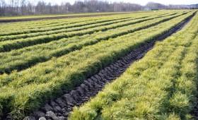 LVM padome apstiprinājusi AS «Latvijas valsts meži» ilgtspējas pārskatu