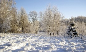☂ Par koku ciršanu ārpus meža zemes