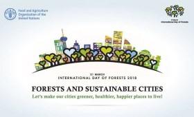 Starptautiskā Meža diena