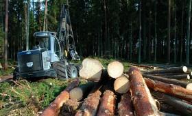 Pārskati Valsts meža dienestā jāiesniedz līdz 1. februārim
