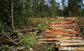 2019. gadā izcirsti 13,34 milj. kbm. koksnes