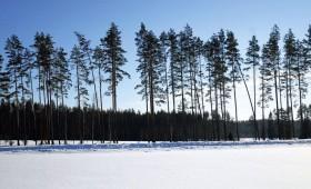 LVM nodod mežu platības aizsardzības ministrijai