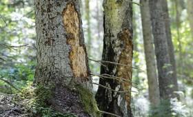 Brexit ietekme uz meža nozari