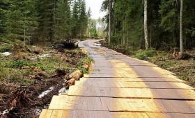 Koka vairogu brauktuves saudzē meža augsni