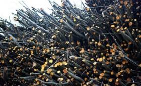 AS «Latvijas  valsts meži» nepieciešami darba veicēji enerģētiskās koksnes ražošanai