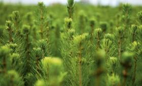 Mudina stiprināt ES mežsaimniecības stratēģiju