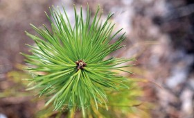 ☂ Pieaugs mežu nozares un koksnes produktu loma ekonomikā