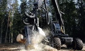Var sākt zāģēt  bojātus kokus