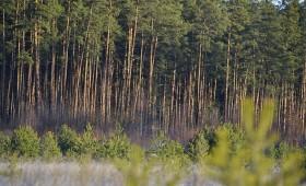 Eiropas Valsts mežu asociācija: ES bioloģiskās daudzveidības stratēģijai 2030. gadam jābūt līdzsvarotai, reālistiskai un realizējamai