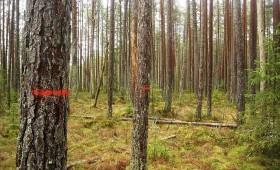 ☂ Laiks plānot meža inventarizāciju. Iespējams sods!