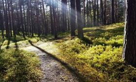 Mežaparks ir mežs vai parks?