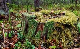 Eiropas Valsts mežu asociācija apspriež mežu nākotni