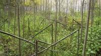 ☂ Jautājumi no meža īpašniekiem