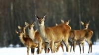 ☂ Jautājumi Valsts meža dienestam no konferences
